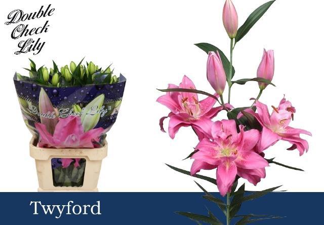 <h4>Lilium (Oriental Grp) dubbel (Oriental Grp) 'Twyford'</h4>