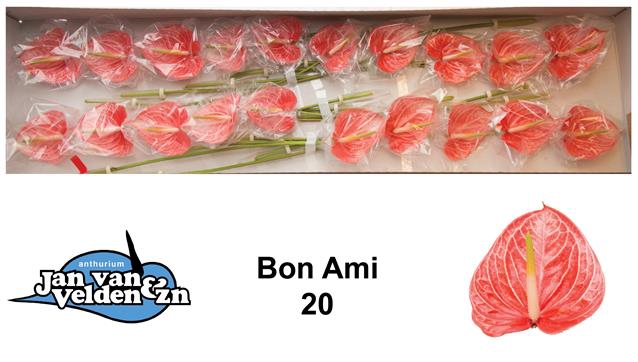 <h4>ANTH A BON AMI</h4>