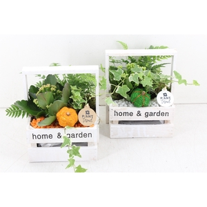 arr. PL - Kist home en garden - oranje/wit