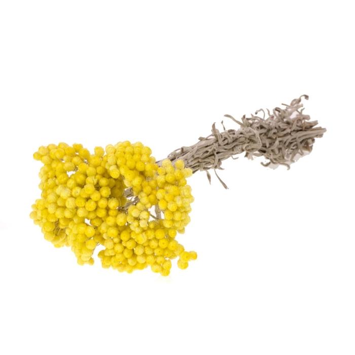 <h4>Immortelle geel natural</h4>