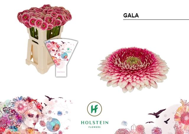 <h4>GE BV hoes Gerponi Gala</h4>