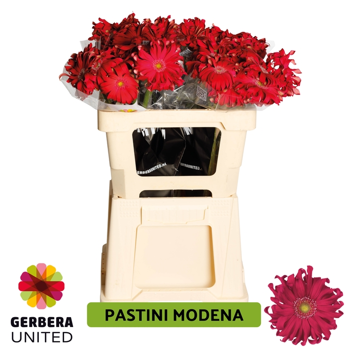<h4>GE GR Pastini Modena water</h4>