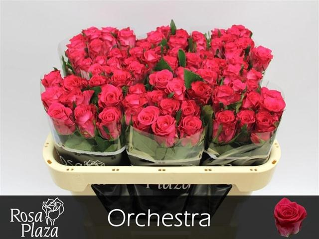 <h4>R GR ORCHESTRA</h4>