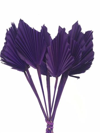 <h4>DRIED PALM SPEAR 10PC PAARS BUNCH</h4>