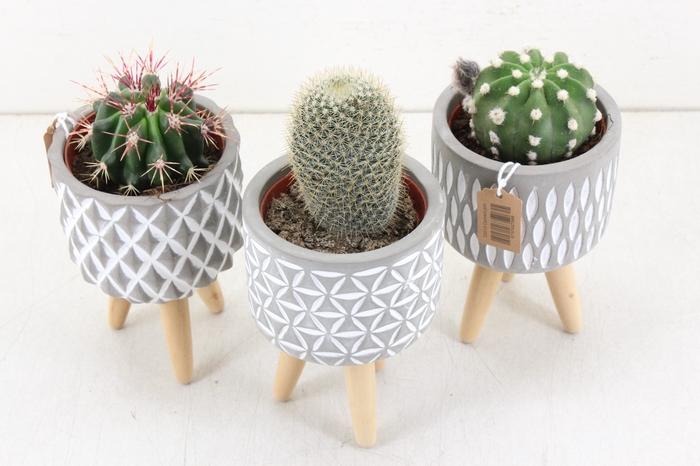<h4>arr.. Cactus UB0214 - Ker. pootjes motief</h4>