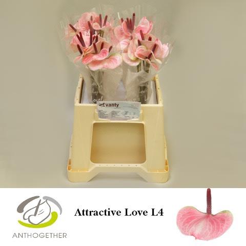 <h4>ANTH ATTRACTIVE LOVE 40 L4.</h4>
