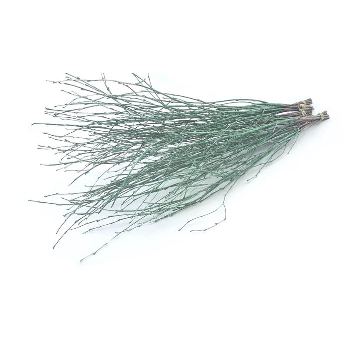 <h4>Birch 120cm 5stems per bunch Metalic Antique Green</h4>