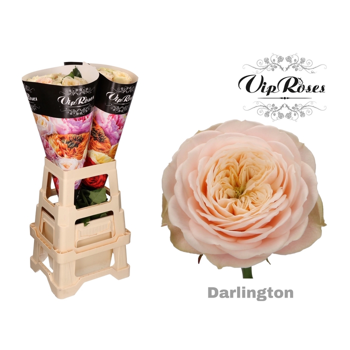 <h4>R GR DARLINGTON</h4>