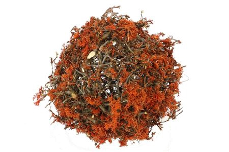 <h4>Ball Bonsai Mossed D25.0 Nat/orange</h4>
