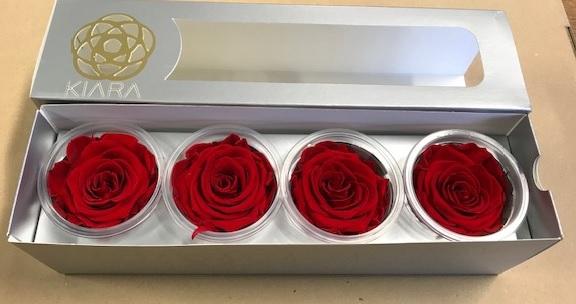 Rose Vibr.Red Super(4)