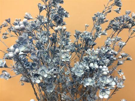 <h4>Wax Flower Licht Blauw</h4>