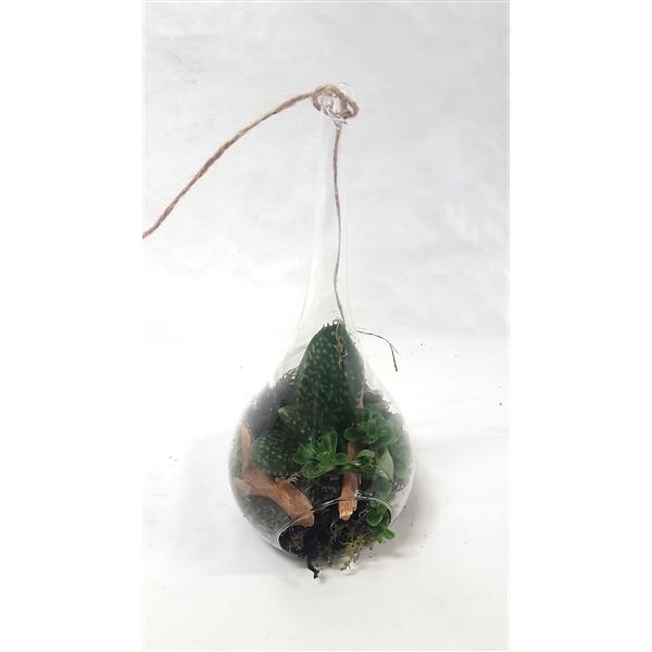 <h4>HDR10NAT Glassdrop D10,H23cm, mini terrarium hang</h4>