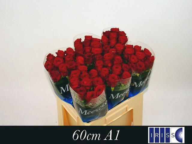 <h4>R GR RED NAOMI!</h4>