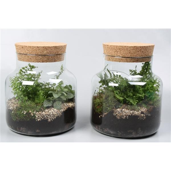 <h4>Plantmix arr.</h4>
