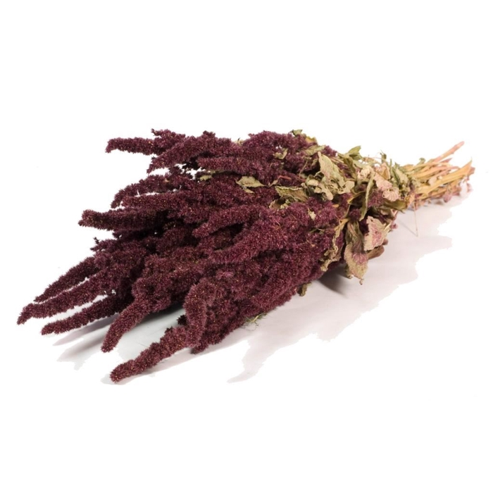<h4>Amaranthus natural red</h4>