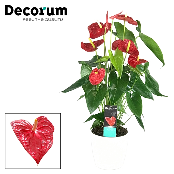 <h4>Anthurium Dakota pot 17 keramiek wit</h4>