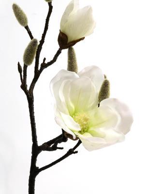 <h4>Silk Magnolia White  43cm Stem</h4>