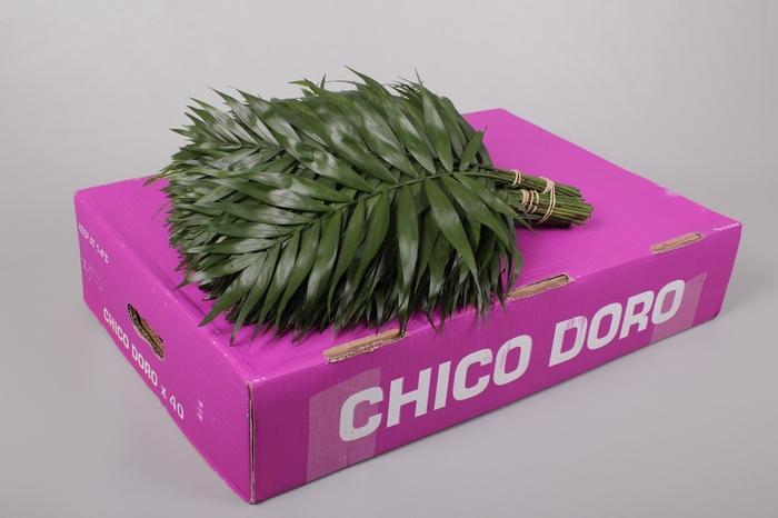 <h4>Chico Doro</h4>