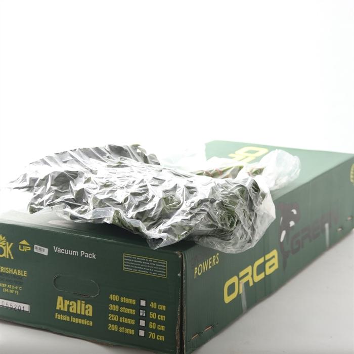 <h4>Aralia vac GT Orca</h4>