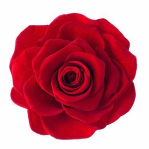 Rose Ava Red