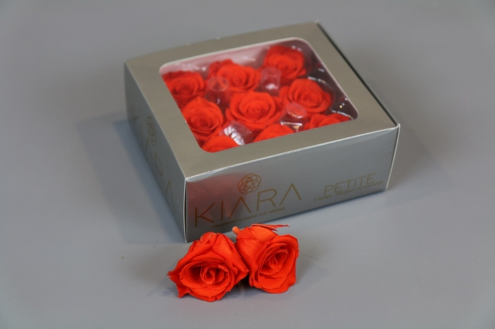 <h4>Rosa Preserved Orange Flame Petite</h4>