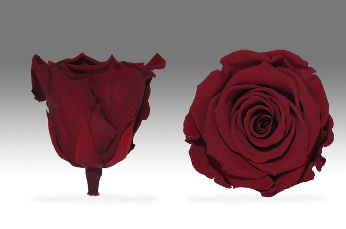 Rose stab. XXL Red-01