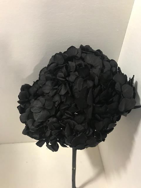 <h4>Hydrangea / Hortensia d15cm zwart</h4>