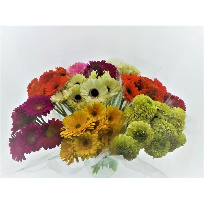 <h4>Bouquet Mono Germini x10 mix 50cm</h4>