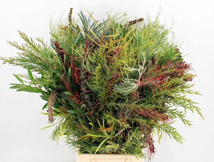 <h4>Acacia baileyana   .../bos</h4>