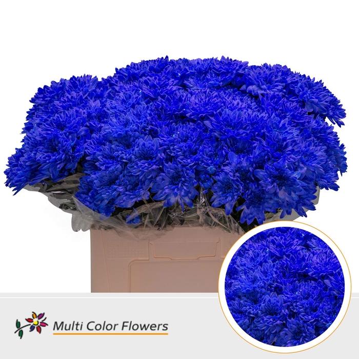 <h4>Chrys.tros Baltica wit gekleurd Blauw donker</h4>