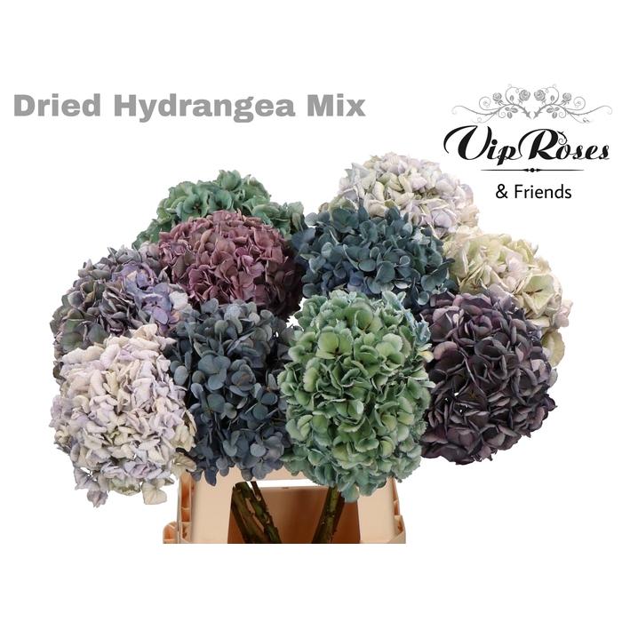 <h4>DRIED HYDRANGEA MIX</h4>