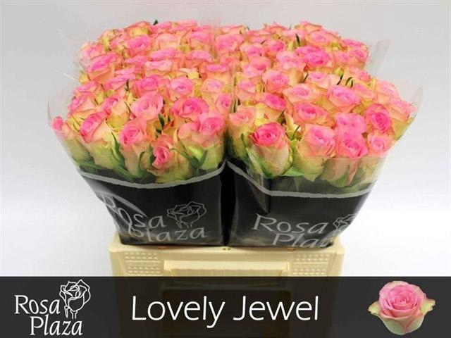 <h4>R GR LOVELY JEWEL</h4>