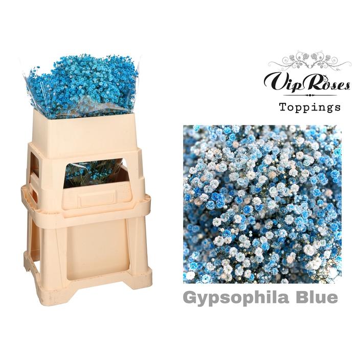 <h4>GYPS PA BLUE</h4>