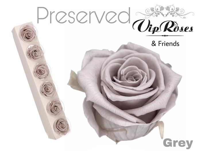 <h4>R PRESERVED GREY</h4>