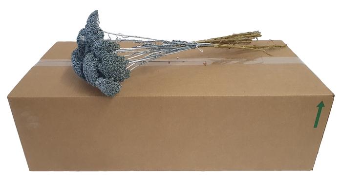 <h4>Achillea per stem Metallic Antique Blue</h4>