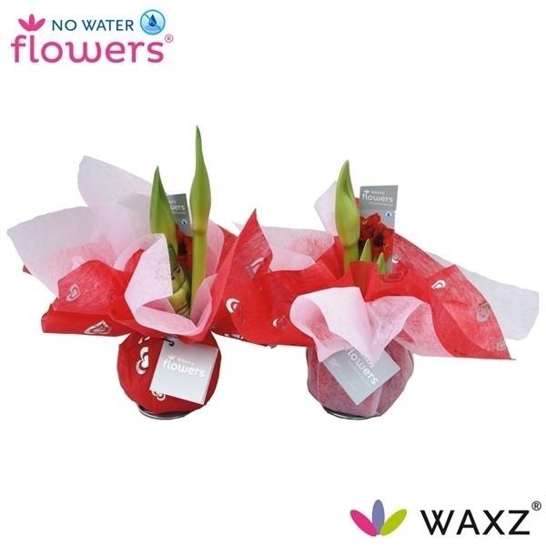 <h4>No Water Flowers Wrapz® VALENTIJN</h4>