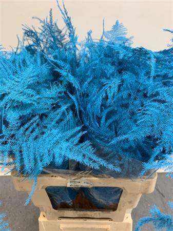 <h4>Asp. Extra Light Blue</h4>