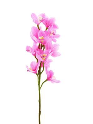 <h4>Af Orchid Cymb. 78cm Pink</h4>