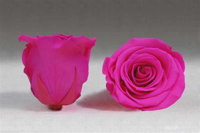 <h4>PRESERVED ROSA LL PIN 07</h4>