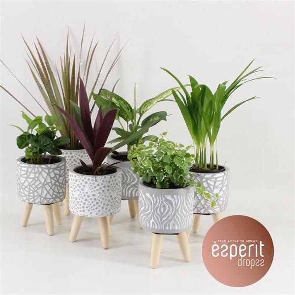 <h4>Groenmix Greenss 4-6 srt. in Pot Wooden Legs</h4>