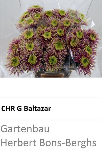 <h4>CHR G BALTAZAR</h4>