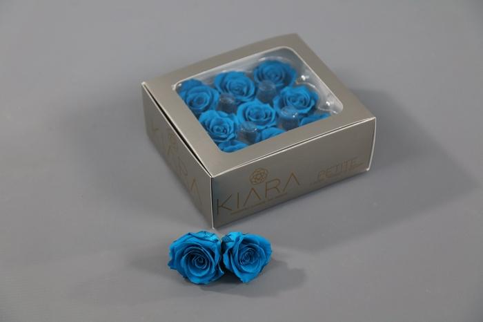 <h4>Rosa Preserved Aquamarine Petite</h4>