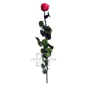 Roos op steel Standard 55cm D.roze