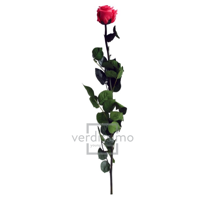 <h4>Roos op steel Standard 55cm D.roze</h4>