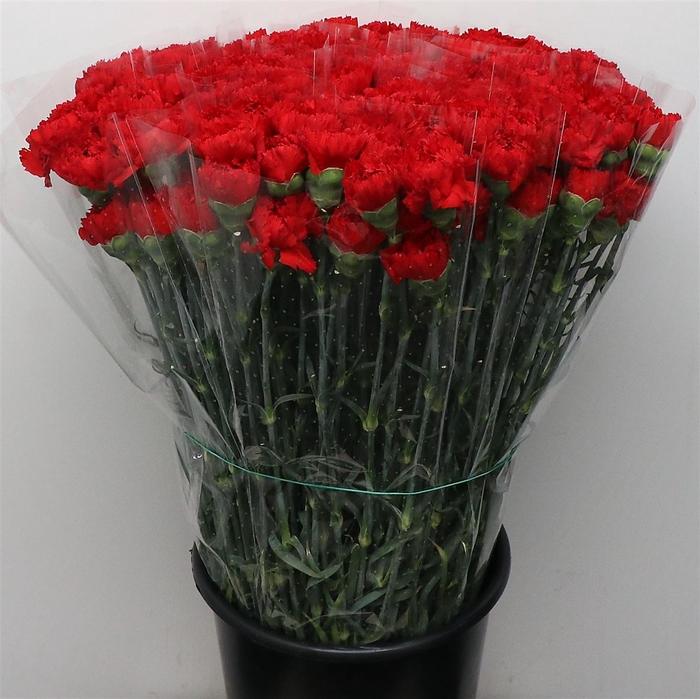 <h4>Di St Eros Red</h4>
