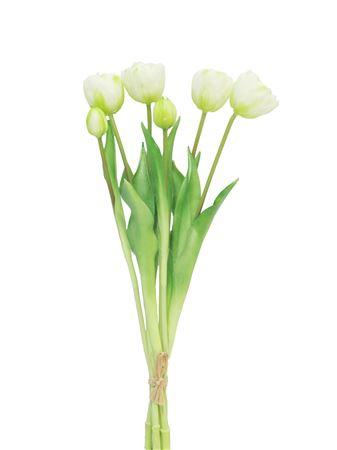 <h4>Double tulip bundle Sallit h44 cream</h4>