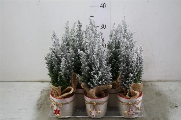<h4>Kerstb Versierd Sneeuw In Keramiek</h4>