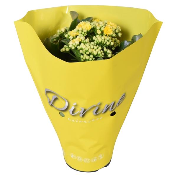 <h4>Kal. double Perfecta yellow</h4>