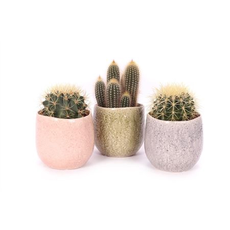 <h4>Cactus 12 Cm In La Quinta Keramiek</h4>