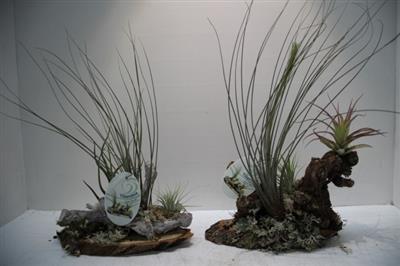 <h4>TILL PLATEAU SMALL 2 PLANT X6</h4>